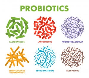 Probiotic anti-aging supplements